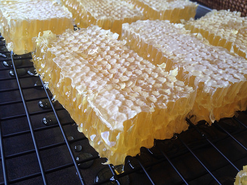 Image result for Cut Comb Honey""